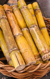 Sugarcane in basket. Green sweet sugarcane in wooden basket on floor Stock Photos