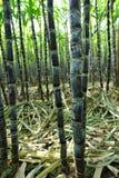 Sugarcane crops Royalty Free Stock Photography