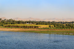 Sugarcane crops on the Nile River, Egypt Stock Image
