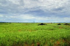 Sugarcane cultivation land. Sugar cane cultivation land in Mauritius Royalty Free Stock Photos