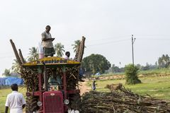 Sugarcane farmers are farmers who rely on the diligence of livelihood. A lot of sugar cane Enough to yield a living. PONDICHERY, PUDUCHERRY, TAMIL NADU, INDIA stock photography