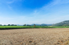 Sugarcane field agriculture tropical farm landscape Royalty Free Stock Images
