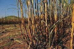 Sugarcane field burning Royalty Free Stock Photos