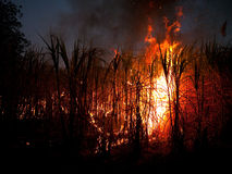 Sugarcane field on fire Royalty Free Stock Images