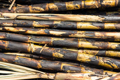 Sugarcane. Field fired. This harvest method make global warming Royalty Free Stock Photography