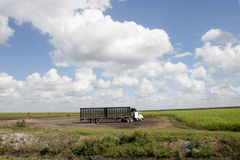 Sugarcane Field Truck. Truck waiting for sugarcane harvest in Southen Florida stock photos