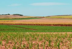 Sugarcane fields for Australian agriculture Royalty Free Stock Photo