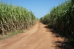 Sugarcane fields Royalty Free Stock Images