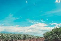 Maui Stock Images
