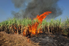 Sugarcane on Fire Stock Photos