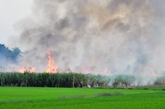 Sugarcane on fire Royalty Free Stock Photography