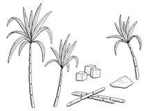 Sugarcane graphic black white isolated sketch illustration Stock Photos