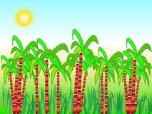 Sugarcane harvest Stock Photography