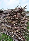 Sugarcane harvest Stock Image