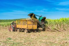 Sugarcane Harvest On The Field With A Combine Harvester - Serie Cuba Reportage Stock Image