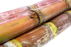 Sugarcane Royalty Free Stock Images