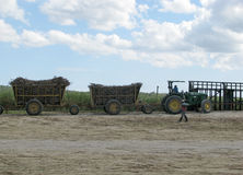 Sugarcane mechanical harvest Stock Image