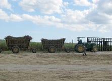 Sugarcane mechanical harvest Stock Image