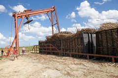 Sugarcane mechanical harvest Stock Photography