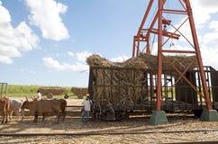 Sugarcane mechanical harvest Royalty Free Stock Photo