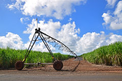 Sugarcane plantation field with gravel road and irrigation device in between stock photos