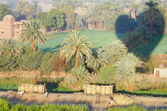 Sugarcane Plantation & Hot Air Balloon Shadow - Egypt Royalty Free Stock Images