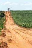 Sugarcane plantation Royalty Free Stock Photo