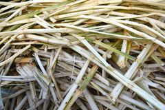 Sugarcane residues Stock Photo