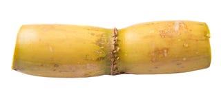 Sugarcane Stalks IX Royalty Free Stock Image