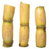 Sugarcane Stalks VI Royalty Free Stock Photos