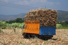 Sugarcane transportation Stock Images