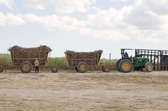 Sugarcane transportation Royalty Free Stock Photo