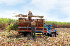 Sugarcane transportation Royalty Free Stock Images