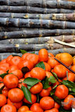 Sugarcanes and orange. Shown as raw, fresh and beautiful fruit with different color and shape Royalty Free Stock Image