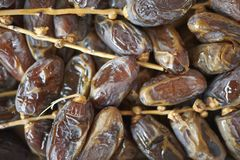 Sugared dates on a tray royalty free stock images