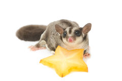 sugarglider with star fruit Stock Photos