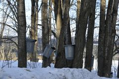 Sugaring season Stock Photography