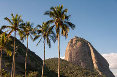 Sugarloaf Mountain and Palm Trees Stock Photo