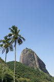 Sugarloaf Mountain Rio Brazil Palm Trees Royalty Free Stock Images