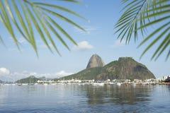 Sugarloaf Pao de Acucar Гора Рио-де-Жанейро Стоковые Изображения