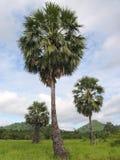 sugarpalm krajobrazu zdjęcia stock