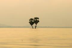 Sugars palma na rzece z lekkim zmierzchu widoku tłem Obraz Royalty Free