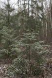 Suger в лесе стоковые изображения rf