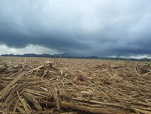 Suger cane field after being cut down Stock Photos