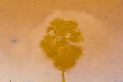 Suger palm trees reflected in water Stock Photography