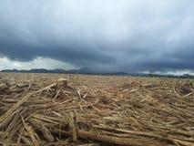 suger trzciny pole po być ciącym puszkiem Zdjęcia Stock