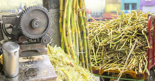 Sugarcane business in panorama Royalty Free Stock Photos
