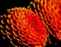 Sugestão de incandescência abstrata dos círculos das flores fotografia de stock