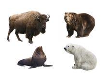 Säugetiere von Russland auf einem weißen Hintergrund Lizenzfreie Stockbilder