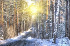 Suggestive view of forest in winter Stock Images